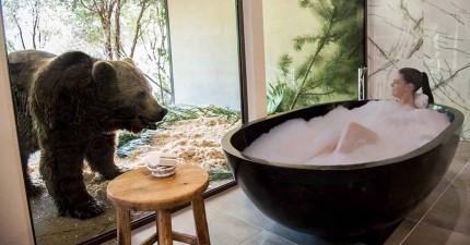 你以為這是合成畫面嗎?不,這家動物園飯店真的要讓你跟動物共度一晚!