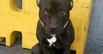 這隻狗狗眼角流的淚水,訴說著主人將他綁在車站棄養的辛酸故事。