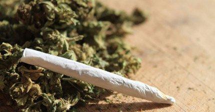 科學研究指出:大麻根本就沒這麼毒!比大麻致命百倍的反倒是你很熟的...