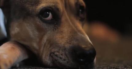 狗狗得癌症讓他透苦不堪,心痛的主人把他們相處的最後幾天拍成這支無比感人的影片。