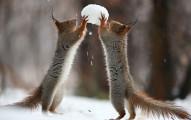 當下雪的時候,這名攝影師捕捉到兩隻小松鼠玩雪球的超可愛模樣!