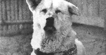 日本東京帝國大學新為忠犬小八立的雕像,一定會讓你哭到讓朋友以為你失戀了!