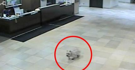 狗狗跟主人有心電感應嗎?這個奇蹟的故事證明:一定有!