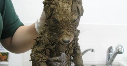 這是什麼泥巴怪!志工花數小時清理 竟然是隻可愛小狐狸~