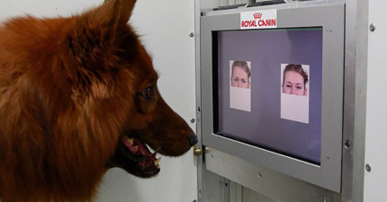 狗狗真的能分辨我們的表情還有情緒差異嗎?科學家首次找到真相的證據!