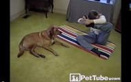 當你的狗狗比你會做瑜伽時,這就是會發生的事情。
