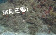 如果你能在這片珊瑚礁中找到大自然最強的忍者大師章魚哥,那就代表你根本就不太正常!