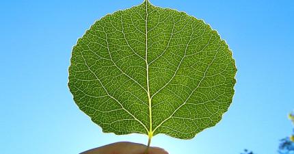 當你觸碰一片葉子時,你其實就正在觸碰著宇宙的「無窮」。