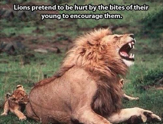 23隻行為舉止最怪異的動物,都已經忘記了自己是什麼動物了...