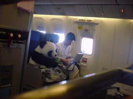 那居然是真的熊貓!