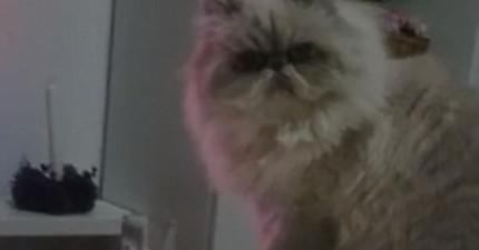 這隻表情凝重的小傢伙接下來做的事情證明,他絕對是全世界最邪惡的貓咪。