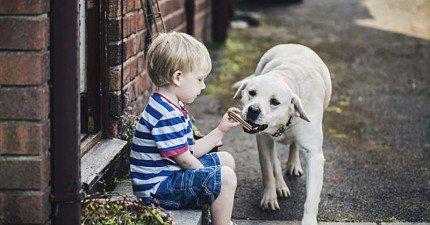養狗人必看!最新研究指出:若你不值得信任,狗狗可是會記舊帳的!