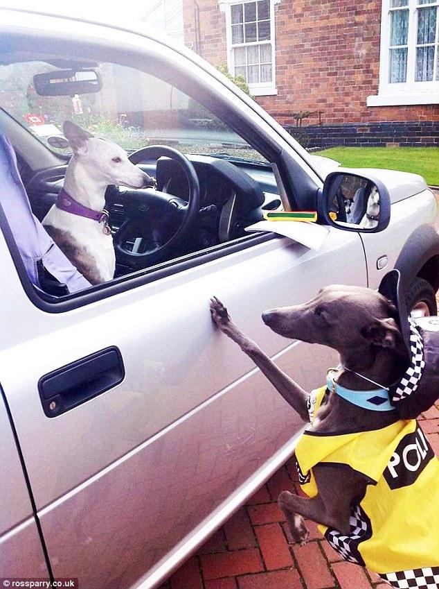 這隻狗狗比人類還要像人類,各種可愛角色扮演會完全擄獲你的心!