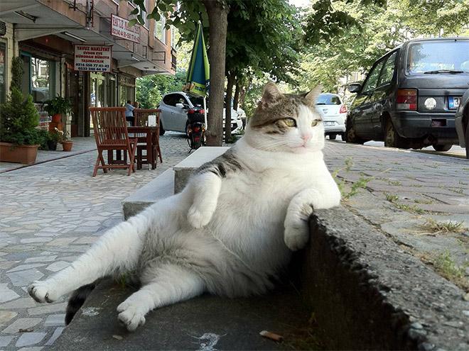 24隻怎麼看都會讓你笑出來的爆笑貓咪坐姿。