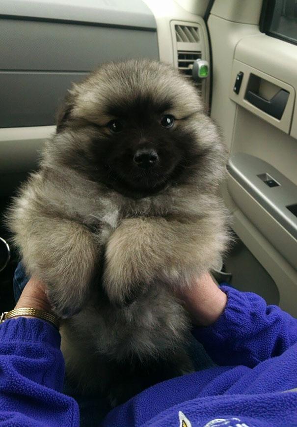 17隻無限蓬鬆的超可愛狗狗,證明有些狗狗根本就是熊嘛!