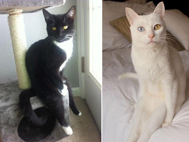 hilarious-cats-sitting-awkwardly-8