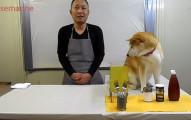 不管你多缺人手,絕對不要找這隻狗狗當你的副主廚,因為這就是會發生的爆笑事情。