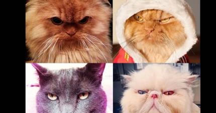 這20隻貓咪很不爽你,不想被萌垮的人還是乖乖聽話吧!