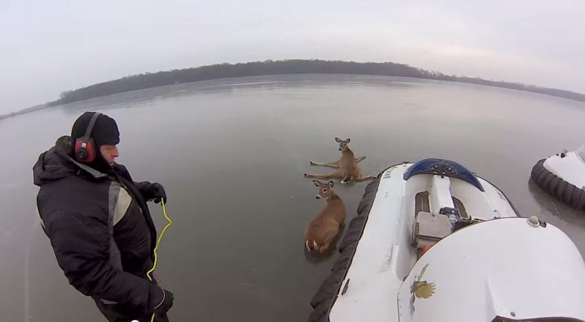 這對父子在冰湖上遇到3隻困住的小鹿班比,他們接下來做的事情讓我看得忍不住叫好!