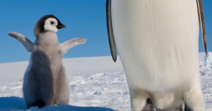 14張動物母子檔的照片,你今天的好心情就靠他們了!