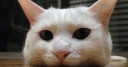 原來貓咪喜歡「靠下巴」這個動作除了賣萌以外,還有更重要的「霸道」用意!