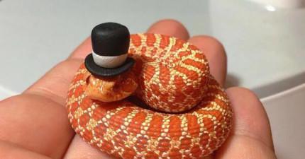 這27隻超可愛的小小蛇,會把你內心對蛇的恐懼完全一掃而空!