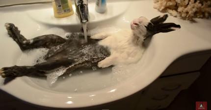 這隻小兔子泡在水槽裡超放鬆的模樣,會把你一整週的疲勞給散去!