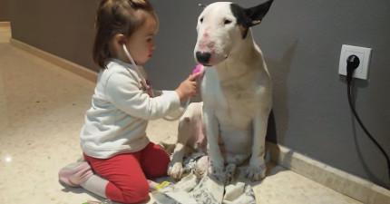 小妹妹跟無奈狗狗玩扮醫生遊戲,賤狗的表情真的太經典了!