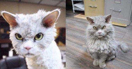 這隻看起來超級憤怒的流氓臉貓咪,讓人感覺只要跟他對到眼就會被狂揍一頓...!