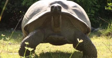 野生陸龜正要交配卻被攝影團隊打斷,憤怒的公龜轉身展開史上最慢的追殺。