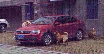 這名男子因為不爽而踢了狗狗一腳,結果狗狗找了他的同伴回到被欺負的地方...