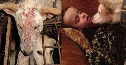 這隻狗狗原本要變成餐桌上的狗肉,但現在他是自閉症男孩最貼心的心靈夥伴!