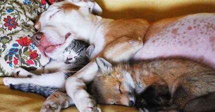 21張毛茸茸動物睡在一起的照片,讓你看完超安心可以關燈睡覺了。