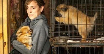 透過直擊繁殖場的恐怖真面目,會讓你看到「買來」的狗狗曾經過了什麼生活!