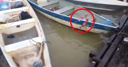 他把一塊肉丟到游滿食人魚的河裡,結果在幾秒內...