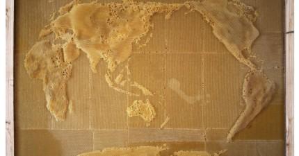 這名藝術家跟蜜蜂合作創造出這張全世界最特別的一幅世界地圖。