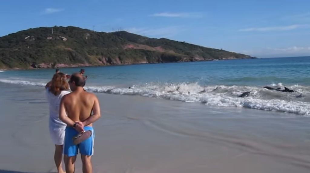 一大群小海豚被沖上岸擱淺,正在海邊戲水的遊客立刻做出最英勇的舉動!