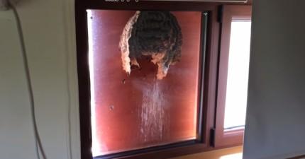 這名男子偶然在窗外發現了這個龐然大物...如果開窗立刻就有生命危險!