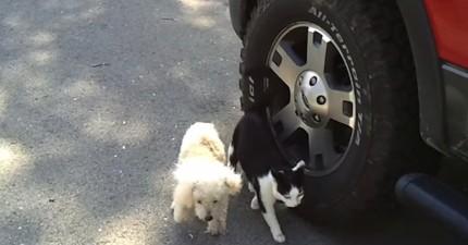 這隻貓咪在馬路上不停黏在狗狗身邊...背後的理由會讓你愛上這對好朋友!
