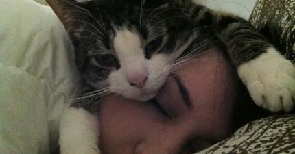 21個貓咪最嚴重的白目罪行,已經欠扁到超可愛的境界了。