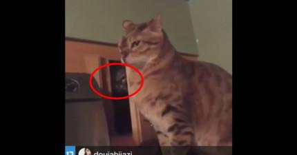這隻貓咪偷偷躲在黑暗的角落,結果慢慢伸出肉球...