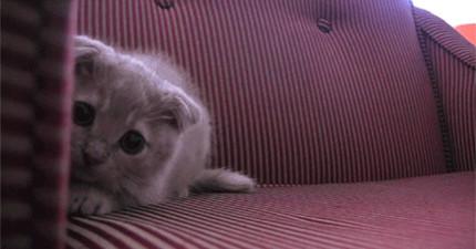 18隻準備攻擊的「搖屁屁」貓咪會讓你一整週充滿喜悅。