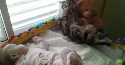 菜鳥貓咪從沒見過小型的人類,寶寶一動貓咪就會不知所措!最後發生的意外讓我不爭氣的笑出來了!