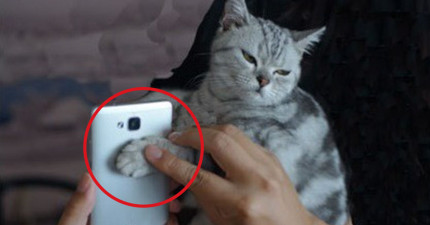 老兄用貓咪的肉球來設定手機螢幕鎖 結局悲慘到他再也不敢了...