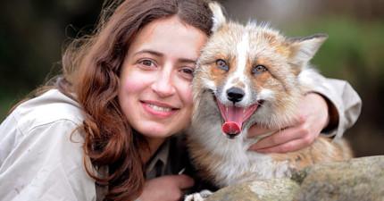 小心!這隻以為自己是狗的狐狸相當危險,要趕快「抱緊」處理!