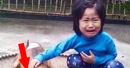 這位越南5歲女孩的狗狗離奇失蹤,最後卻在一個最令人心碎的地方找到她...