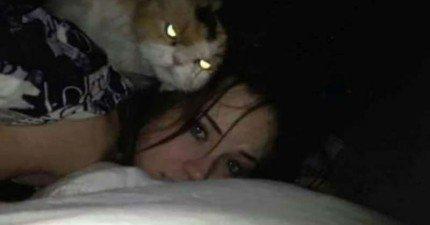 28隻邪惡的貓咪很明顯打算偷偷把主人送上西天...!