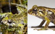 科學家新發現:給這隻青蛙3分鐘,他就會讓你相信這世界上是有超能力!