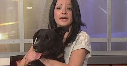 這隻英勇的狗狗對著救援人員不停地吠叫,直到救援人員被帶進樹林中才發現其中的重要原因...