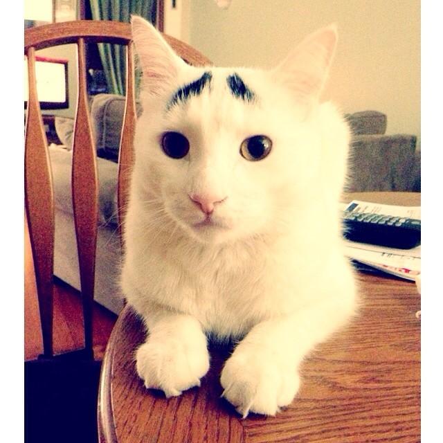 這隻貓即便已經紅透半邊天了,但他還是很困惑、很需要你的幫助。